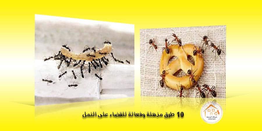 10 طرق مذهلة وفعالة للقضاء على النمل