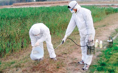 انواع المبيدات الحشرية