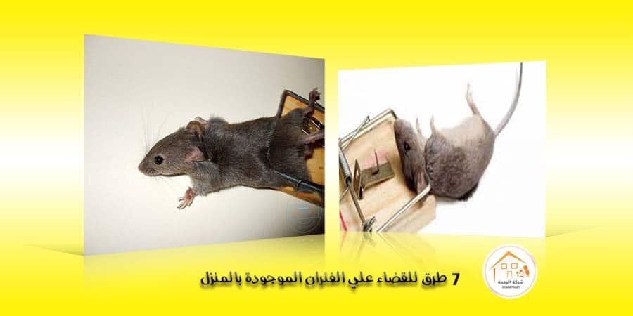7 طرق للقضاء علي الفئران الموجودة بالمنزل