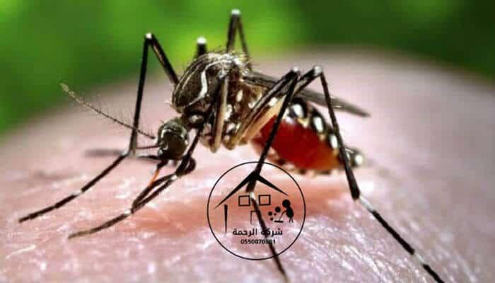 صورة لحشرة