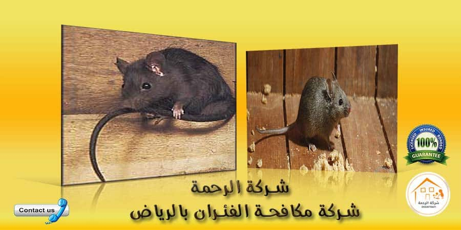 مكافحة القوارض الرياض