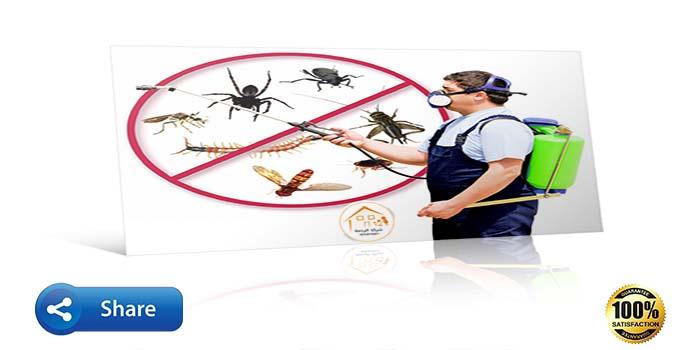 عامل يقوم برش الحشرات