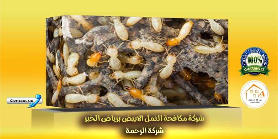 شركة مكافحة النمل الابيض برياض الخبراء